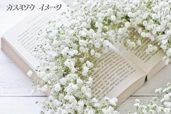 フラワーリリースの花の種、カスミソウのイメージ写真です。